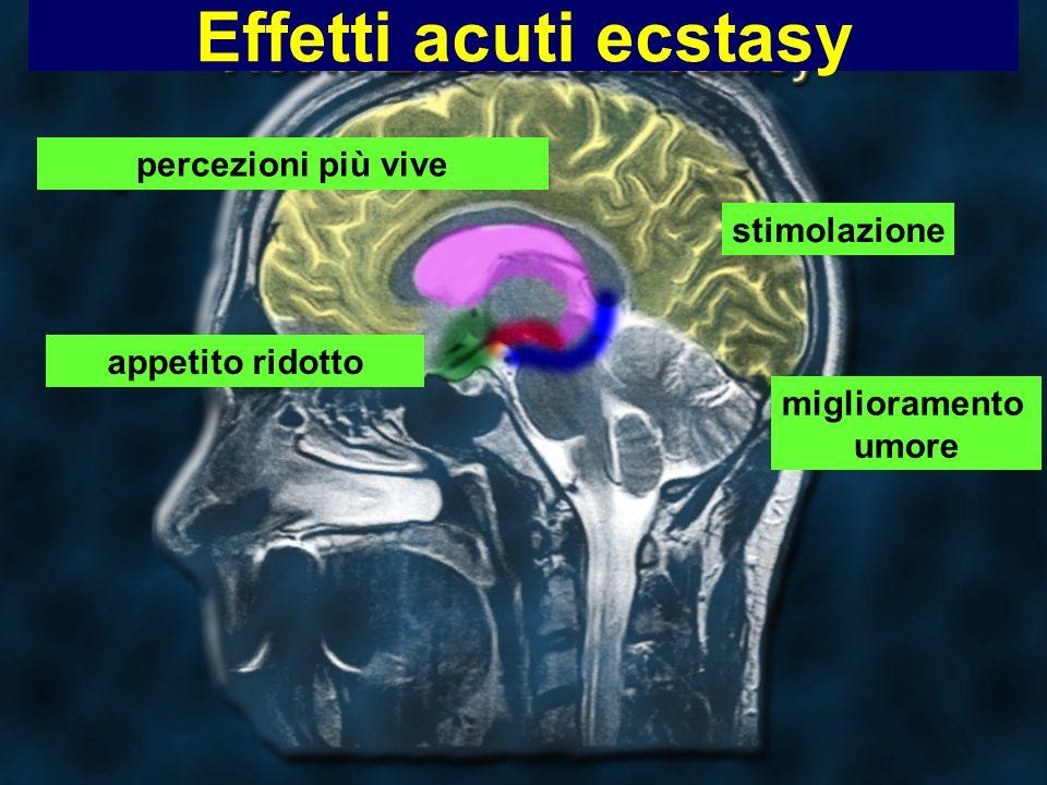 Effetti acuti ecstasy percezioni più vive stimolazione