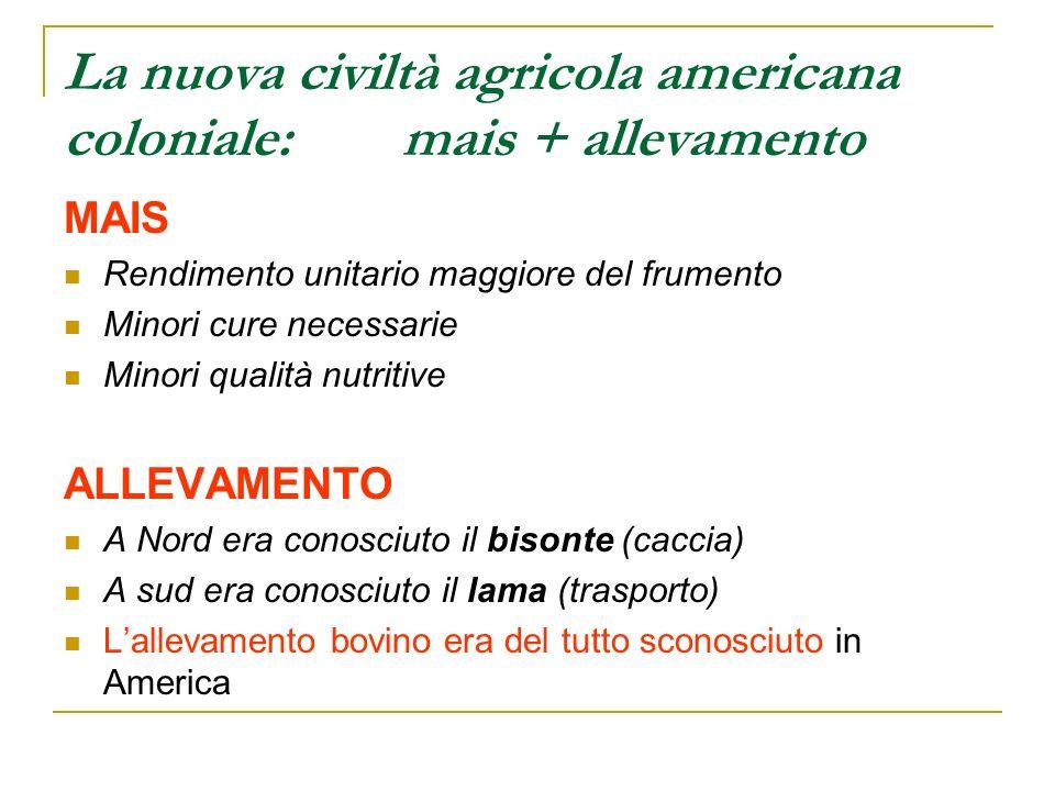 La nuova civiltà agricola americana coloniale: mais + allevamento