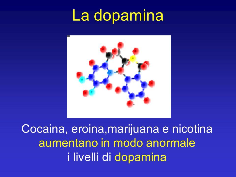 La dopamina Cocaina, eroina,marijuana e nicotina