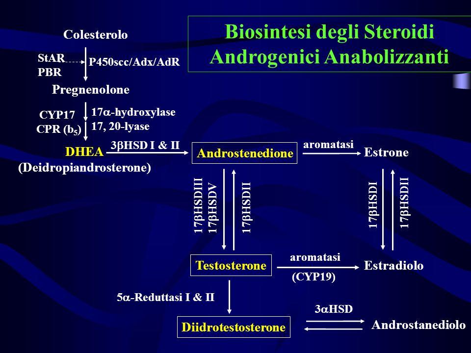 Biosintesi degli Steroidi Androgenici Anabolizzanti