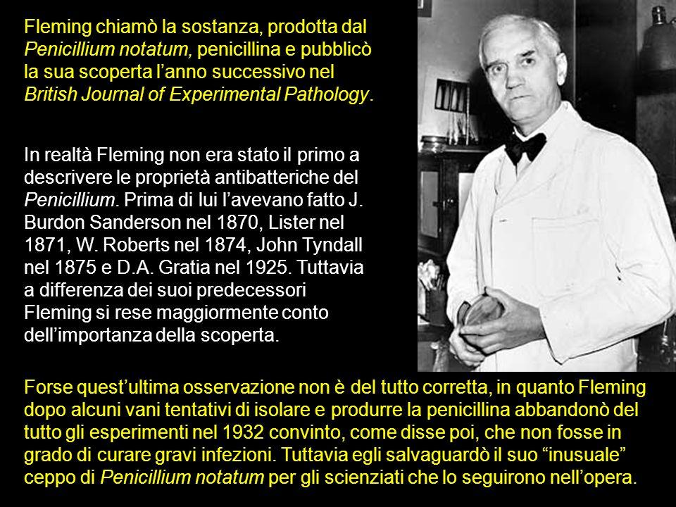 Fleming chiamò la sostanza, prodotta dal Penicillium notatum, penicillina e pubblicò la sua scoperta l'anno successivo nel British Journal of Experimental Pathology.