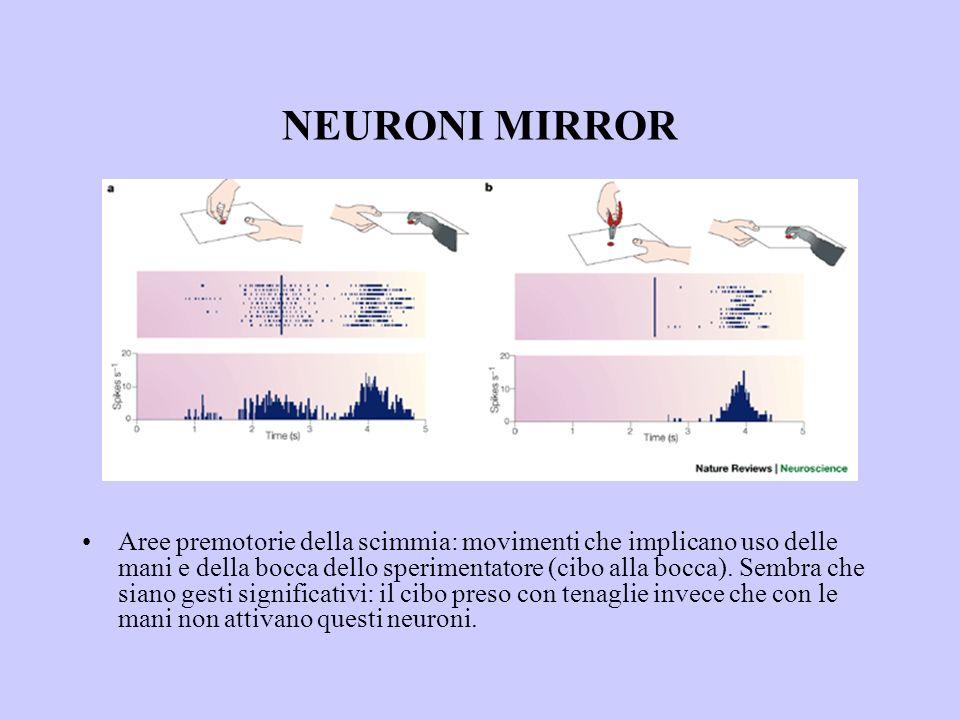 NEURONI MIRROR