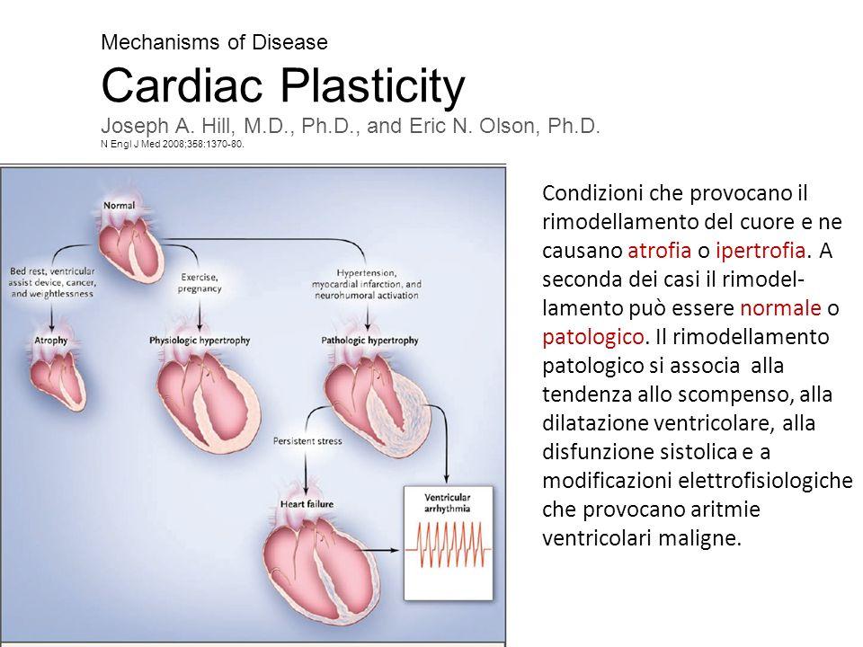 Mechanisms of DiseaseCardiac Plasticity. Joseph A. Hill, M.D., Ph.D., and Eric N. Olson, Ph.D. N Engl J Med 2008;358:1370-80.