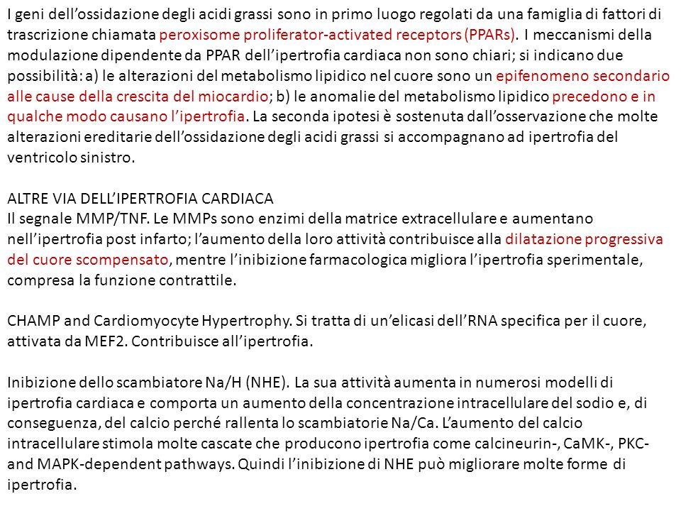 I geni dell'ossidazione degli acidi grassi sono in primo luogo regolati da una famiglia di fattori di trascrizione chiamata peroxisome proliferator-activated receptors (PPARs). I meccanismi della modulazione dipendente da PPAR dell'ipertrofia cardiaca non sono chiari; si indicano due possibilità: a) le alterazioni del metabolismo lipidico nel cuore sono un epifenomeno secondario alle cause della crescita del miocardio; b) le anomalie del metabolismo lipidico precedono e in qualche modo causano l'ipertrofia. La seconda ipotesi è sostenuta dall'osservazione che molte alterazioni ereditarie dell'ossidazione degli acidi grassi si accompagnano ad ipertrofia del ventricolo sinistro.
