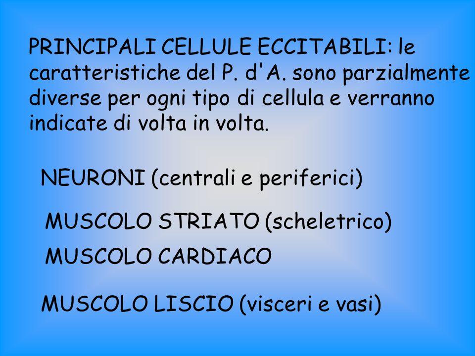 PRINCIPALI CELLULE ECCITABILI: le caratteristiche del P. d A