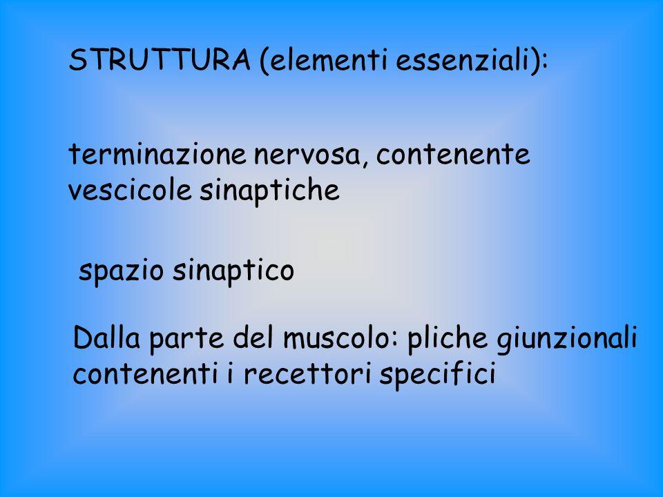 STRUTTURA (elementi essenziali):