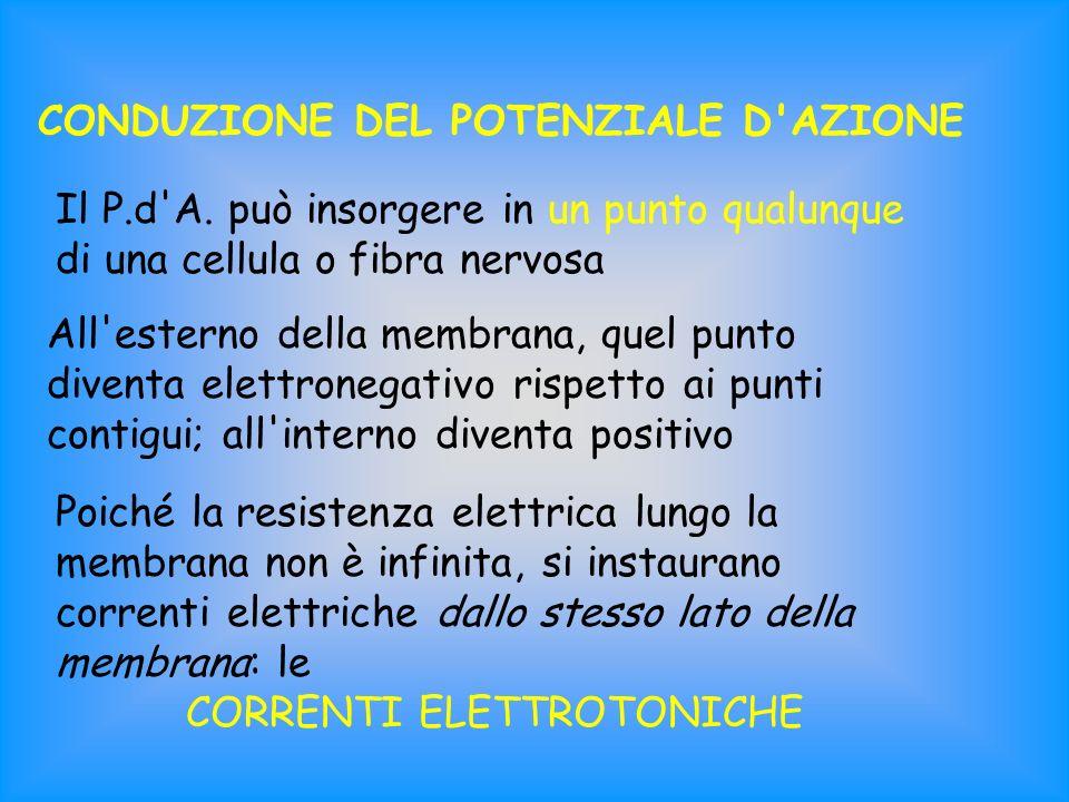 CORRENTI ELETTROTONICHE