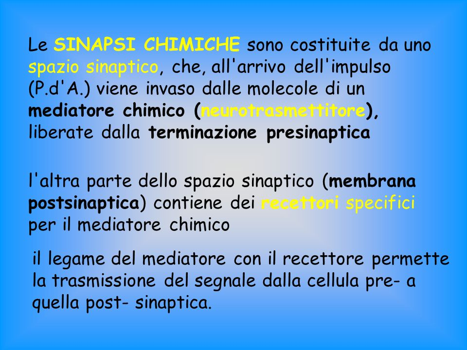 Le SINAPSI CHIMICHE sono costituite da uno spazio sinaptico, che, all arrivo dell impulso (P.d A.) viene invaso dalle molecole di un mediatore chimico (neurotrasmettitore), liberate dalla terminazione presinaptica