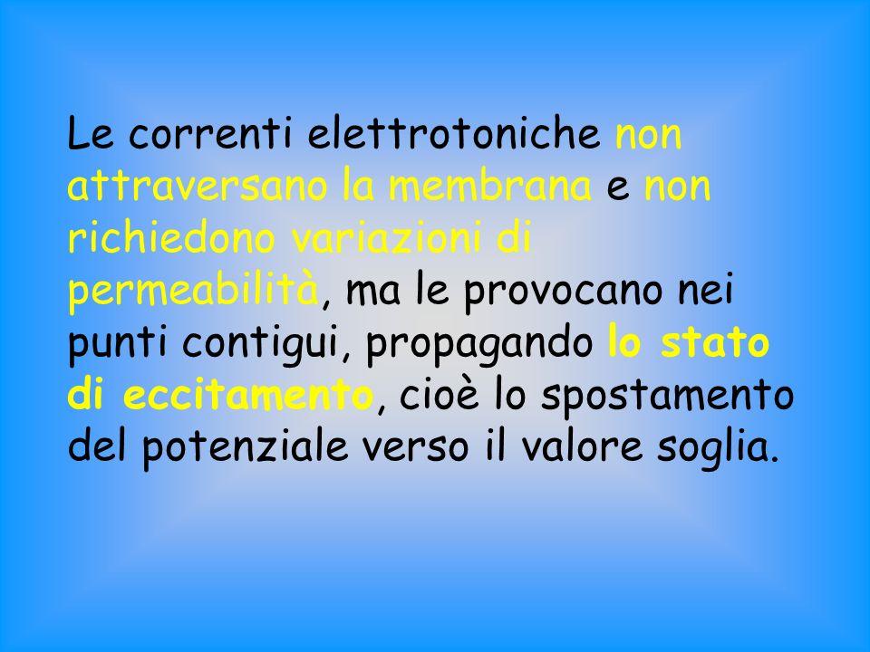 Le correnti elettrotoniche non attraversano la membrana e non richiedono variazioni di permeabilità, ma le provocano nei punti contigui, propagando lo stato di eccitamento, cioè lo spostamento del potenziale verso il valore soglia.