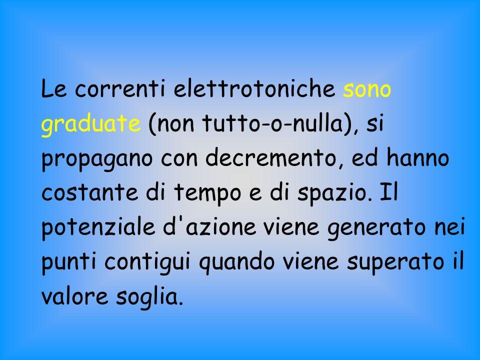 Le correnti elettrotoniche sono graduate (non tutto-o-nulla), si propagano con decremento, ed hanno costante di tempo e di spazio.