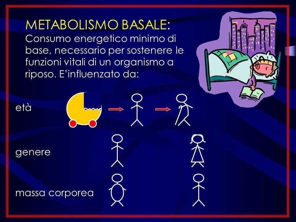 METABOLISMO BASALE: Consumo energetico minimo di base, necessario per sostenere le funzioni vitali di un organismo a riposo. E'influenzato da: