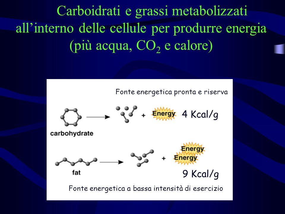 Carboidrati e grassi metabolizzati all'interno delle cellule per produrre energia (più acqua, CO2 e calore)