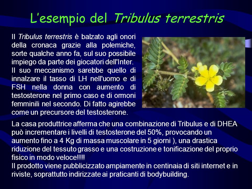 L'esempio del Tribulus terrestris