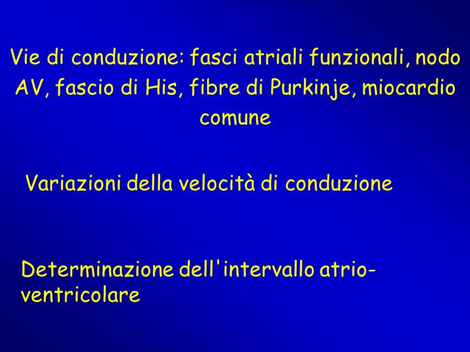Vie di conduzione: fasci atriali funzionali, nodo AV, fascio di His, fibre di Purkinje, miocardio comune