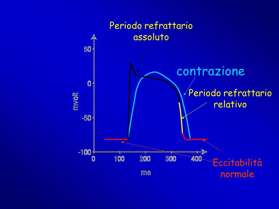 contrazione Periodo refrattario assoluto Periodo refrattario relativo