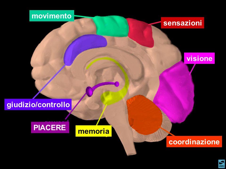 movimento sensazioni visione giudizio/controllo PIACERE memoria