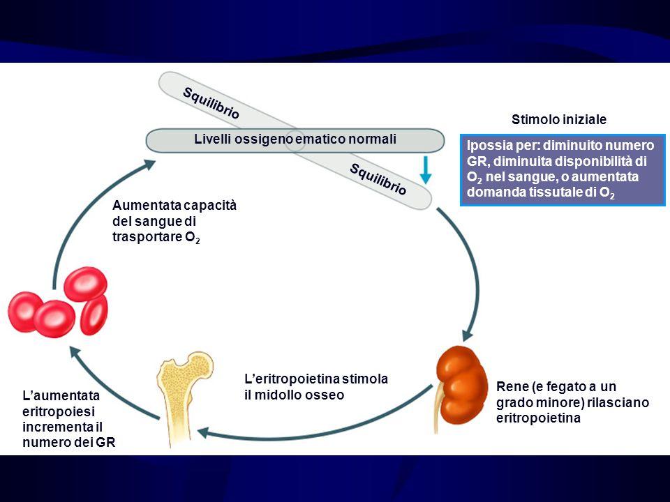 Erythropoietin Mechanism