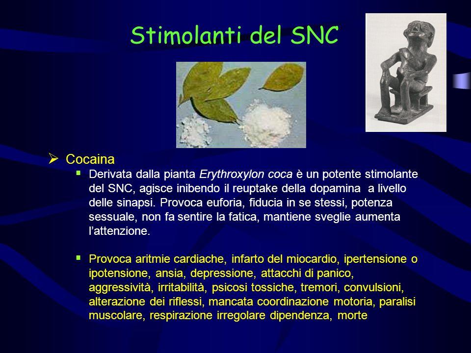 Stimolanti del SNC Cocaina