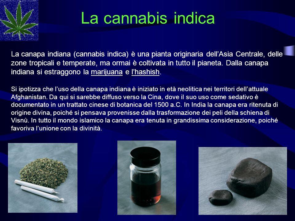 La cannabis indica
