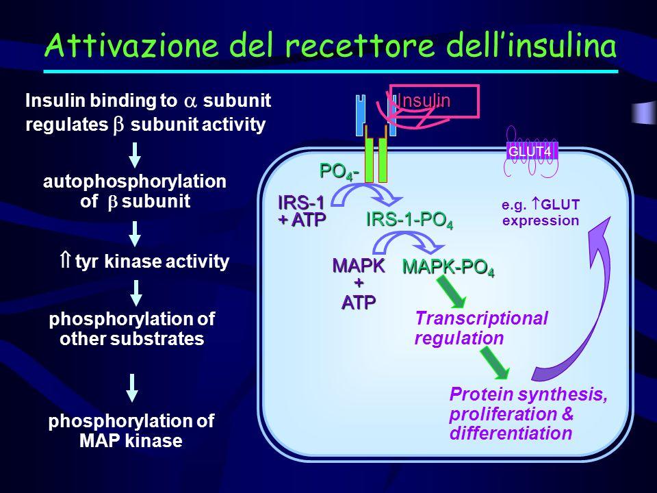 Attivazione del recettore dell'insulina