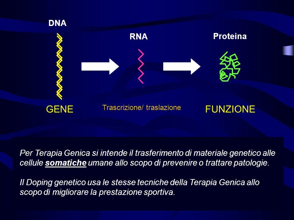 GENE FUNZIONE DNA RNA Proteina