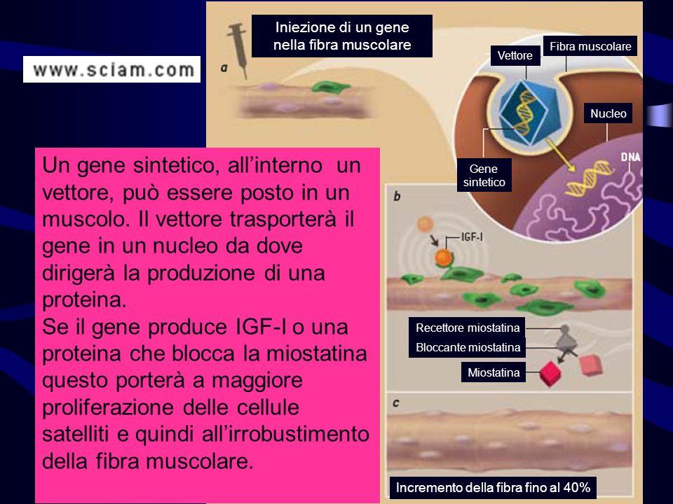 Iniezione di un gene nella fibra muscolare