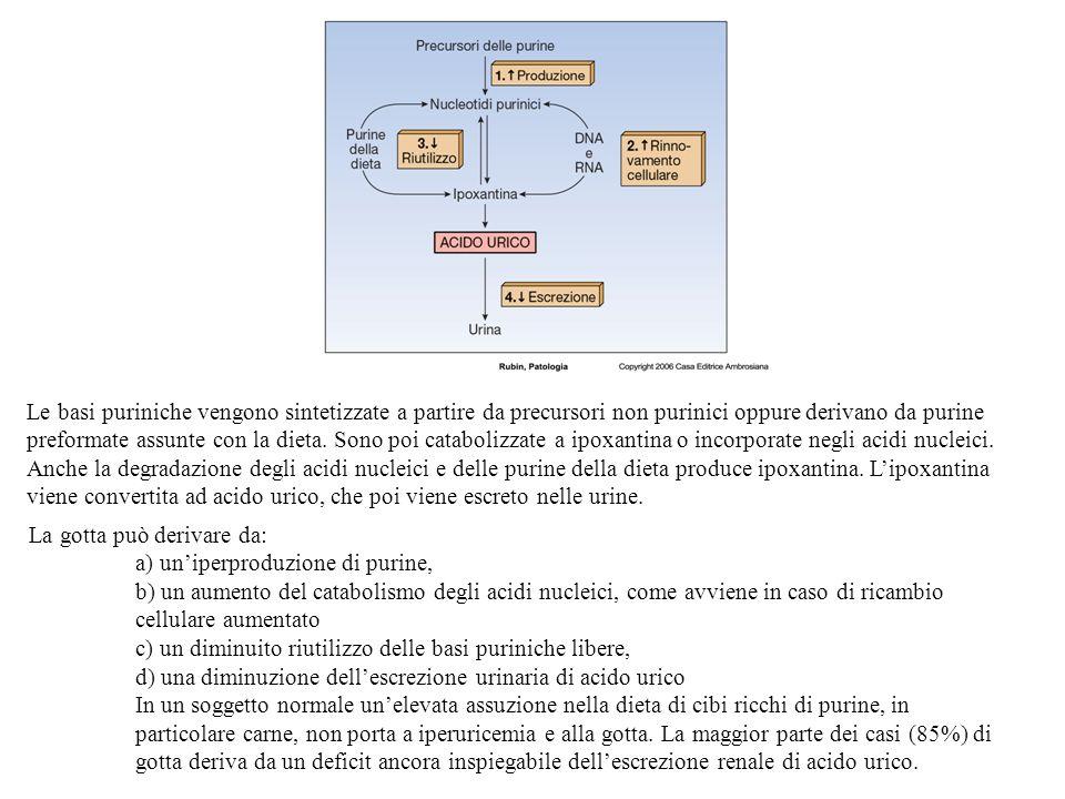 Le basi puriniche vengono sintetizzate a partire da precursori non purinici oppure derivano da purine preformate assunte con la dieta. Sono poi catabolizzate a ipoxantina o incorporate negli acidi nucleici. Anche la degradazione degli acidi nucleici e delle purine della dieta produce ipoxantina. L'ipoxantina viene convertita ad acido urico, che poi viene escreto nelle urine.