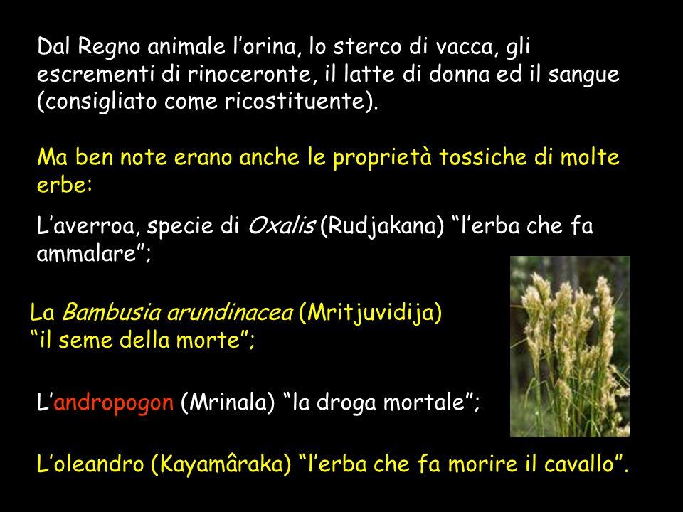 Dal Regno animale l'orina, lo sterco di vacca, gli escrementi di rinoceronte, il latte di donna ed il sangue (consigliato come ricostituente).