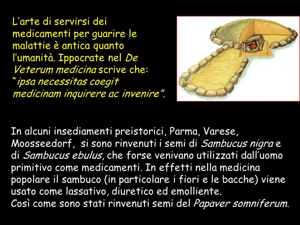Così come sono stati rinvenuti semi del Papaver somniferum.