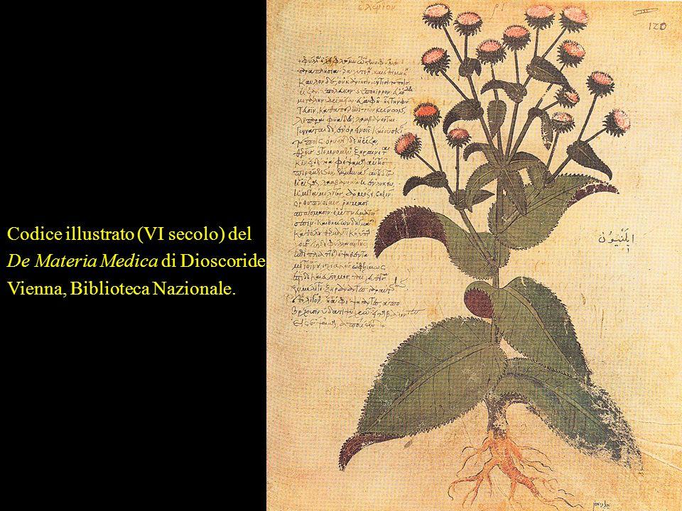 Codice illustrato (VI secolo) del De Materia Medica di Dioscoride.