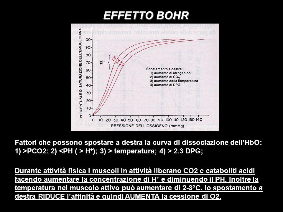 EFFETTO BOHR Fattori che possono spostare a destra la curva di dissociazione dell'HbO: 1) >PCO2: 2) <PH ( > H+); 3) > temperatura; 4) > 2.3 DPG;