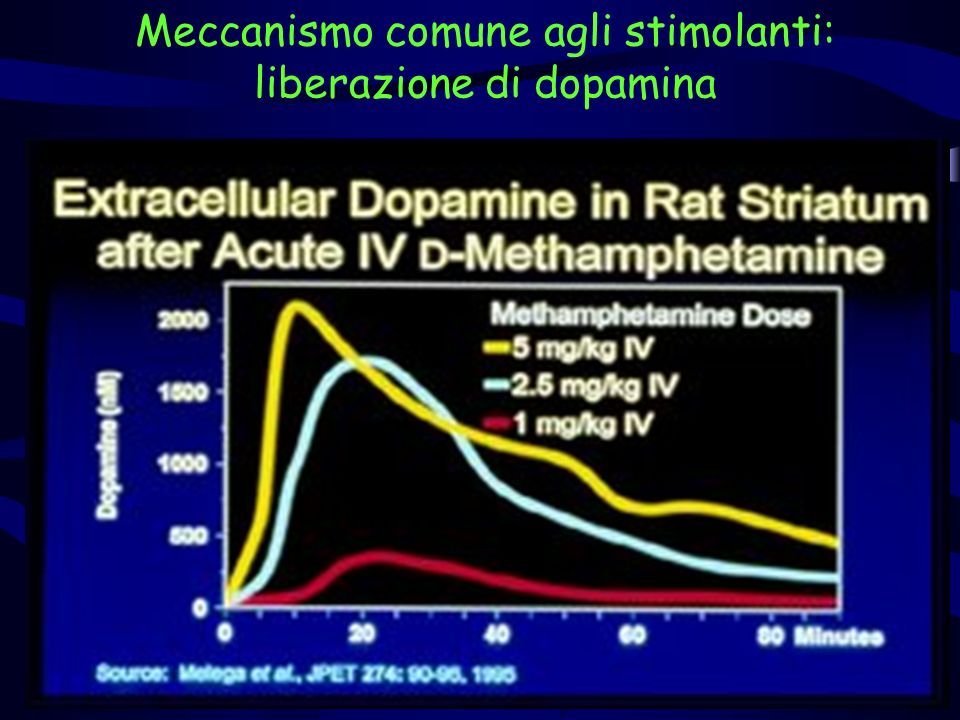 Meccanismo comune agli stimolanti: liberazione di dopamina