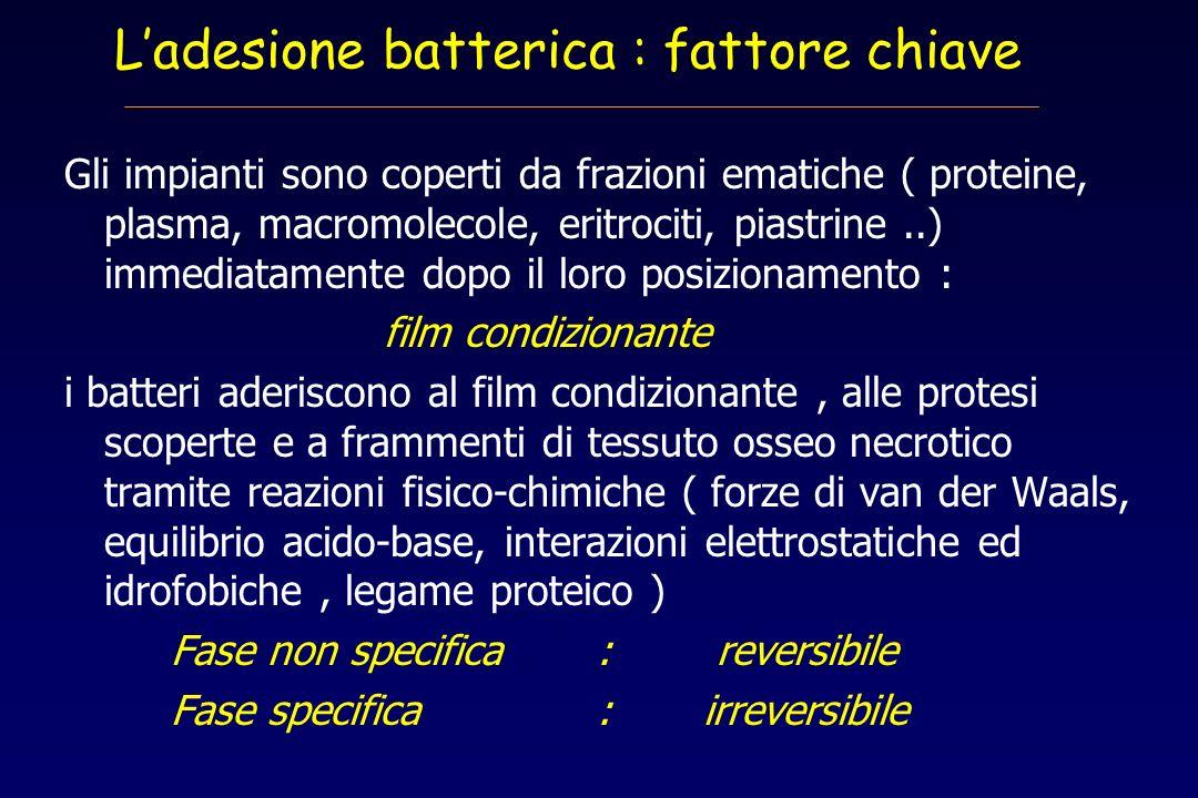 L'adesione batterica : fattore chiave