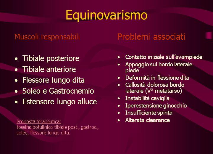 Equinovarismo Problemi associati Muscoli responsabili