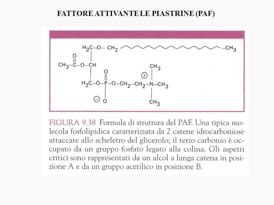 FATTORE ATTIVANTE LE PIASTRINE (PAF)