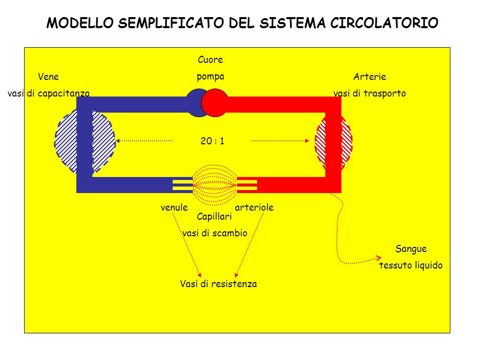 MODELLO SEMPLIFICATO DEL SISTEMA CIRCOLATORIO