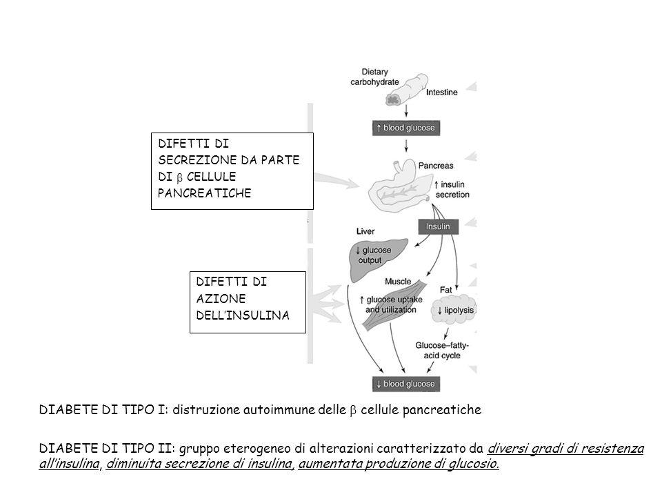 DIABETE DI TIPO I: distruzione autoimmune delle b cellule pancreatiche