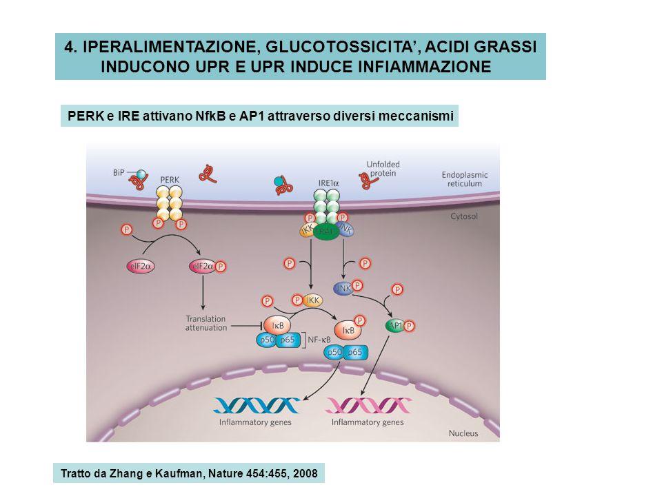 4. IPERALIMENTAZIONE, GLUCOTOSSICITA', ACIDI GRASSI