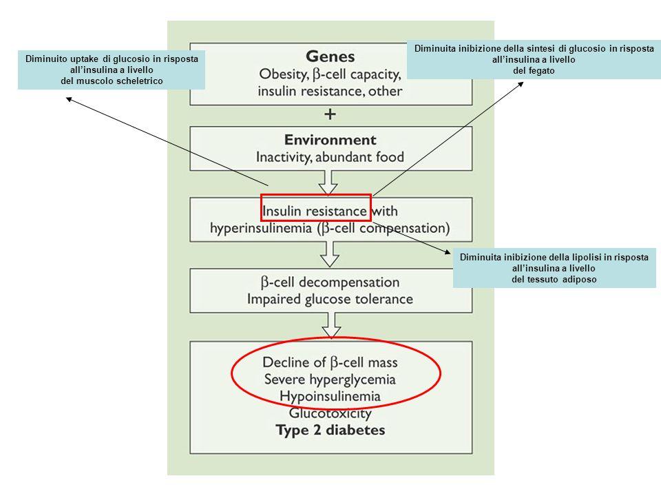 Diminuita inibizione della sintesi di glucosio in risposta