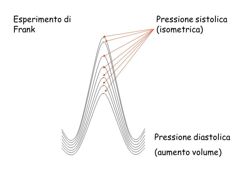 Esperimento di Frank Pressione sistolica (isometrica) Pressione diastolica (aumento volume)