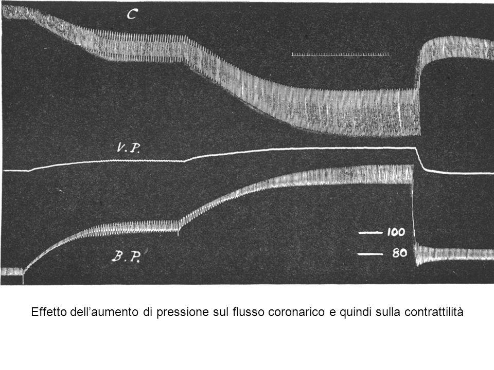 Effetto dell'aumento di pressione sul flusso coronarico e quindi sulla contrattilità