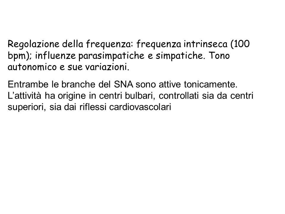 Regolazione della frequenza: frequenza intrinseca (100 bpm); influenze parasimpatiche e simpatiche. Tono autonomico e sue variazioni.