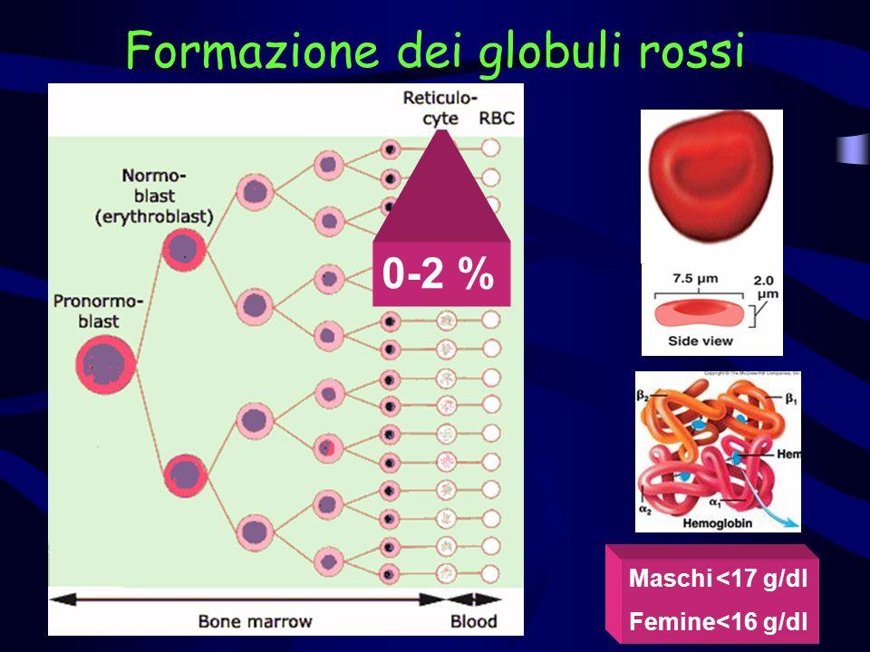 Formazione dei globuli rossi