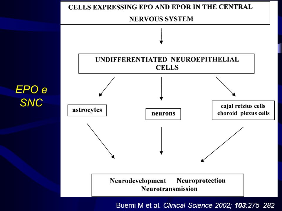 EPO e SNC Buemi M et al. Clinical Science 2002; 103:275–282