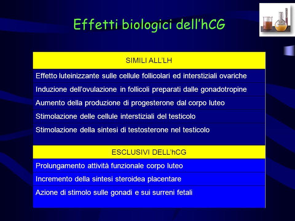 Effetti biologici dell'hCG