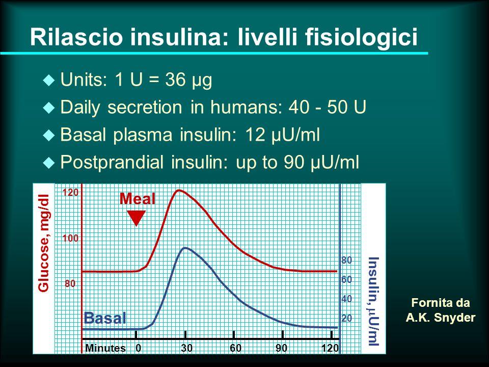 Rilascio insulina: livelli fisiologici