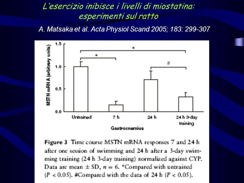 L'esercizio inibisce i livelli di miostatina: esperimenti sul ratto