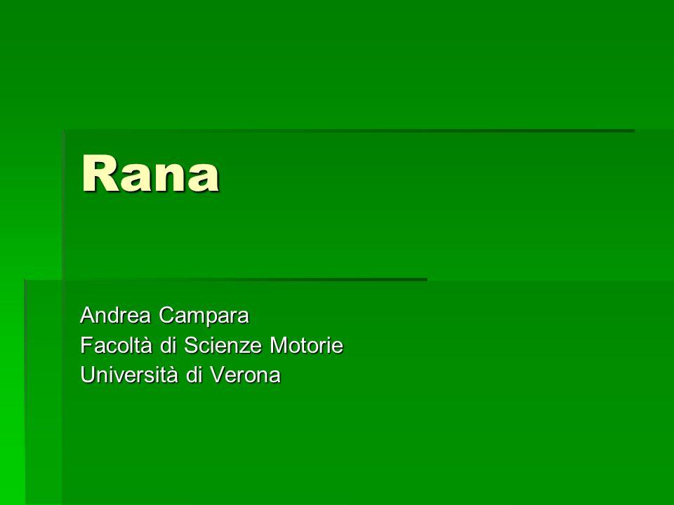Andrea Campara Facoltà di Scienze Motorie Università di Verona