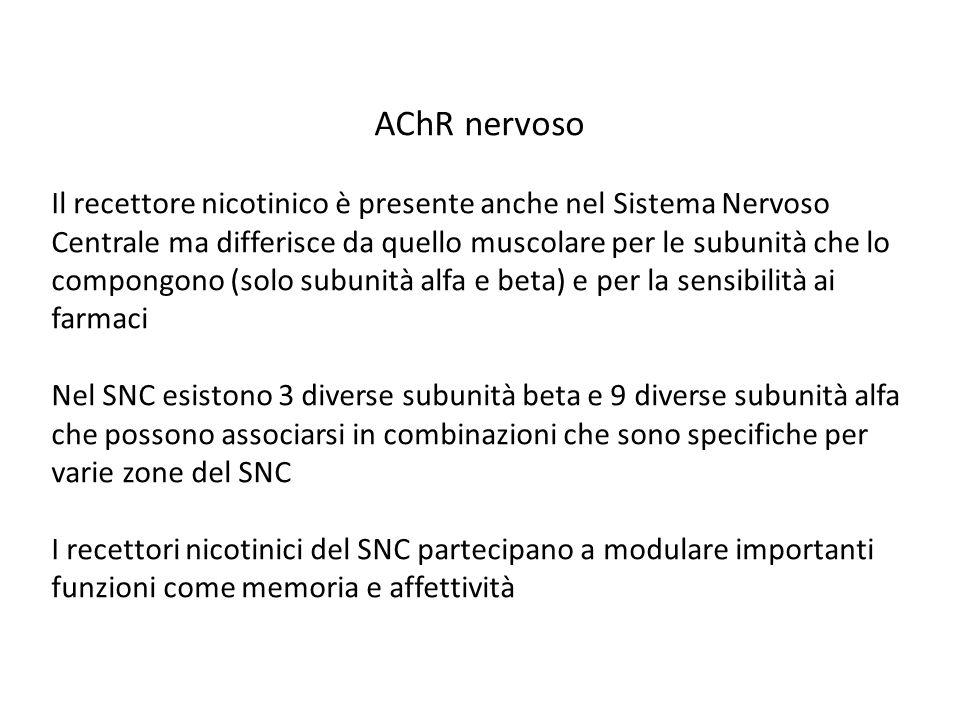 AChR nervoso