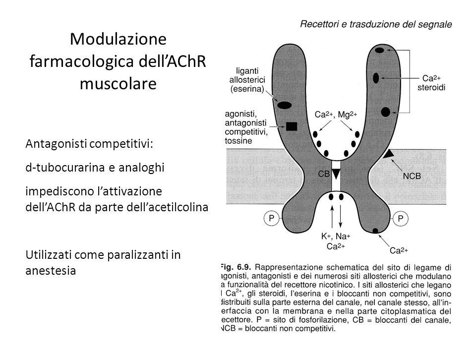 Modulazione farmacologica dell'AChR muscolare